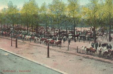PBK-6850 Koeien en handelaren op de Veemarkt