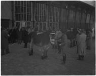 3027 Jaarlijkse verplichte stamboekkeuring van de Koninklijke Vereniging 'Het Nederlandse Trekpaard' op het Veemarktterrein.