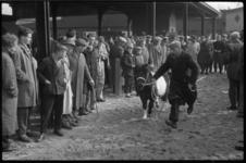 3125 Pony's geshowd op de Paasveetentoonstelling op Veemarktterrein.