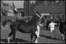 5047-1 Voorgeleiden van paard opde 91e Paasveetentoonstelling.