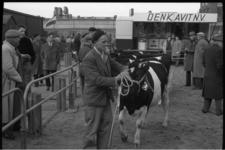 5047-2 Voorgeleiden van koe op de 91e Paasveetentoonstelling.