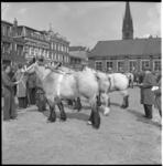 6154 Rij paarden met handelaren tijdens de 92e Paasveetentoonstelling op het Veemarktterrein..