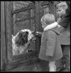 7219 Sint Bernhardhond krijgt bezoek in dierenasiel.