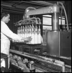 8001 Productielijn melkfabriek Sterovita.
