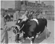 872-1 Zuidhollandse Fokveedag, gehouden op de Veemarkt. In het midden de commissaris van de Koningin mr. J. Klaasesz en ...
