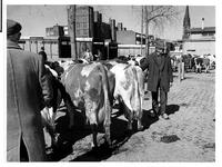 1973-1125 Veehandelaren met de koeien aan de Veemarkt.