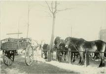 XIV-109-00-01 Paarden op de Veemarkt.
