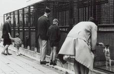 XXV-8-04-05-02 Gezicht op de hondenhokken, van het dierenopvangcentrum van de Dierenbescherming Rotterdam aan de ...