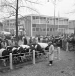 21043 Veemarkt aan de Boezemweg.