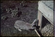 105 Het konijn in de tuin van de familie Boske.