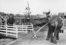 XXXIII-579 Vooropening van de nieuwe Diergaarde te Blijdorp door de olifant Aida.