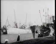 BB-0195 Het schip de Prins van Oranje voert koeien aan. Via Rotterdam Terminal gaan zij naar het slachthuis.