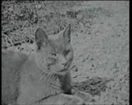 BB-3974 Jonge katjes spelen met hun moeder in de tuin van de woning van de familie Van der Leeuw, aan het ...