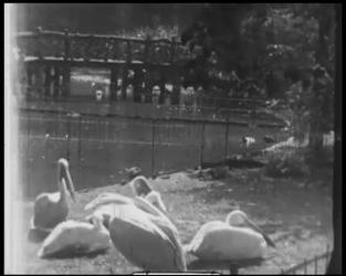 BB-7478 Bezoek aan de oude diergaarde (Diergaardesingel). O.a. flamingo's, lepelaars en ritten op een olifant. Diverse ...