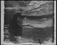 BB-7483 Bezoek aan de oude Diergaarde (Diergaardesingel). O.a. zeehonden, pinguïns, apen in een kooi, papegaaien en ...