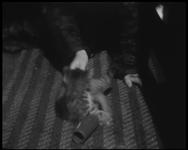 BB-7494 Een kat wordt vermaakt op de kokosmat. Er wordt geschaatst op de Schiedamsesingel met de Waalsekerk als ...
