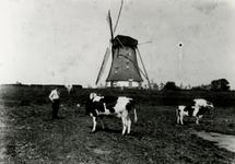 1981-2688 Eén van de watermolens aan de Boezem. Op de voorgrond Jan Valk, een Crooswijkse warmoezier bij de koeien van ...