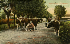 PBK-1987-60 Het melken van koeien op een landweg.