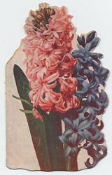 PBK-1993-1024 Prentbriefkaart met hyacinten en daaronder 10 stadsgezichten in een boekje als leporello aaneen.