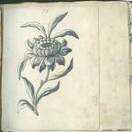 1976-3195-59 Tegelvoorbeeld met tekeningen uit het modellenboekje voor tegels: grote bloem, iets meer dan halve grootte