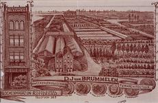 1972-1819 Reclamedrukwerk van een briefhoofd van de kwekerijen van D.J. van Brummelen, aan de Kleiweg nummer 90. Tevens ...