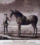 RI-1332 Malle Jan, het snelste paard van Europa.