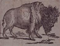 RI-1548 1833Afbeelding van de grote Noord-Amerikaanse bizon die in Rotterdam is aangekomen.