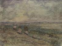 XXVIII-15-13-2 Schapen in het natuurgebied De Beer.