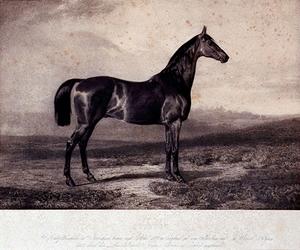 XXXIV-28-12 Paard Stilton.