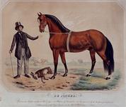 XXXIV-28-4 De Jonker is een beroemd paard in de circus.
