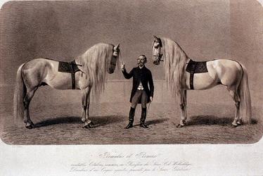 XXXIV-28-9 De voorstelling van de paarden van Romulus et Remus.