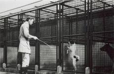 1974-1703-TM-1708 Gezichten op het dierenopvangcentrum van de Dierenbescherming Rotterdam aan de Abraham van ...