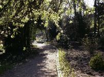 1981-1973 Bomenpark Arboretum Trompenburg aan de Honingerdijk.