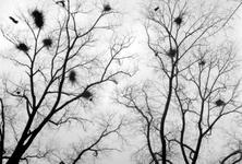 1992-206 Gezicht op takken van bomen aan de.Groene Hilledijk.