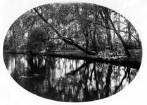 1993-1697 Gezicht in het Plaswijckpark aan de C.N.A. Looslaan.