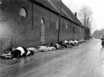 1993-795 Een combinatie van zeer zware storm en springvloed veroorzaakt een watersnoodramp in Zeeland en delen van ...