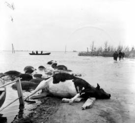 1993-840 Een combinatie van zeer zware storm en springvloed veroorzaakt een watersnoodramp in Zeeland en delen van ...