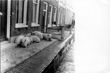 1993-959 Een combinatie van zeer zware storm en springvloed veroorzaakt een watersnoodramp in Zeeland en delen van ...
