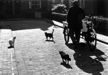 1997-1843 Op een hofje zijn er katten bij een viskoopman.