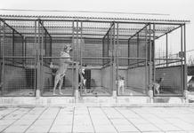 2005-5750 In het dierenasiel. Aan de Abraham van Stolkweg