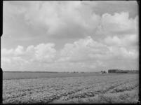 FD-4286-10 Opname van akkerland met in de verte de Waalhaven, de graansilo aan de Maashaven en de Kruisvindingskerk aan ...