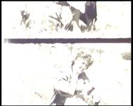 BB-7617 Amateurfilm van de Kilima Hawaiians / familie Buijsman. Zwart-wit en kleurenfilm (vanaf 04:08) met ...