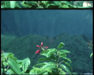 BB-7619 Amateurfilm van de Kilima Hawaiians / familie Buijsman. Gecombineerd bezoek Hawaii en Las Vegas (USA). Per auto ...