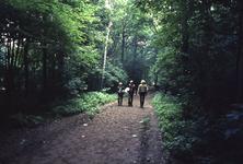 2006-47-020 Diareportage van het Holland Popfestival in het Kralingse Bos (20): een groepje wandelaars op een bospad.