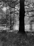 IX-2426-02-1 Het Park, in de zomer.