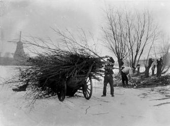 VIII-41-02 De Kralingse Plas met sneeuw, tijdens het kappen van bomen. Op de achtergrond molen de Ster aan de Kortekade.