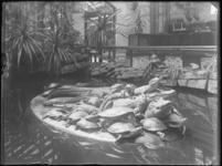 1976-4059 Het verblijf met de amfibieën, krokodillen en schildpadden, in de Rotterdamsche Diergaarde.