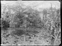 1976-4060 Tropische kas met een vijver en waterplanten in de Rotterdamsche Diergaarde.