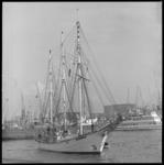 10364 Het Poolse zeilende schoolschip Zamisza Czarny bezoekt Rotterdam en zal afmeren aan de Parkkade.