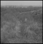 10799-2 Duinlandschap in Oostvoorne.